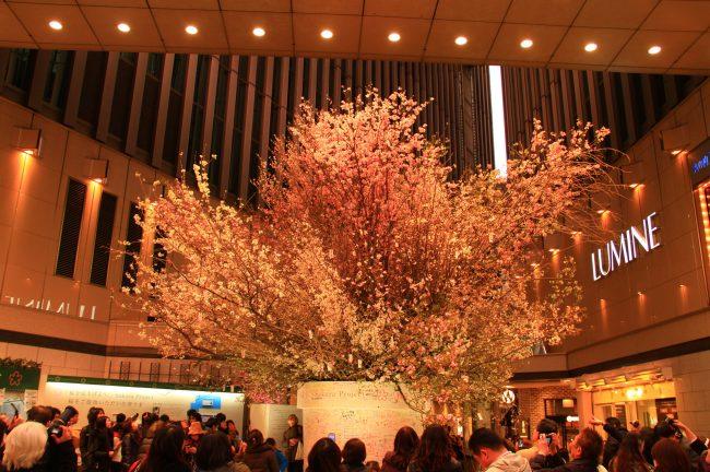「桜を見上げよう。」Sakura Project