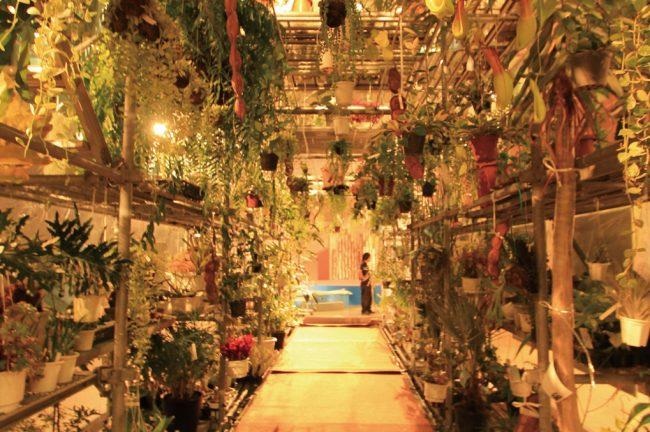 IMS SUMMER FESTA 2012 そら植物園 in FUKUOKA