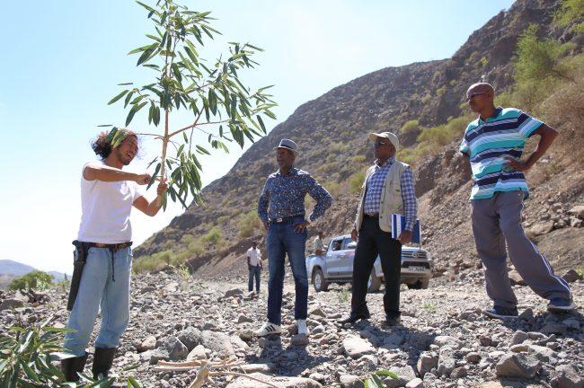 ジプチ共和国 森林再生プロジェクト