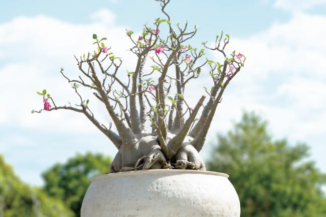 ウルトラ植物博覧会 2016 西畠清順と愉快な植物たち